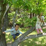 木登りして一息