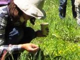 利き野草茶