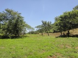 遊木の森は今日も晴天