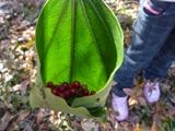 葉っぱのポーチ