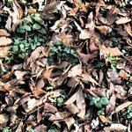 落ち葉の間から緑