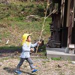 竹の棒発見