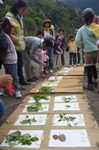 天ぷらになる野草
