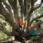 木の秘密基地