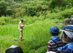 稲の成長観察