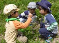 野外保育里山いっぽ2014年度募集中