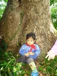 こんなに大きな木