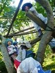 木登り大好き