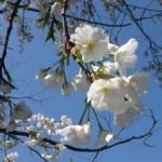 【遊木の森】4/5(日)春の野遊びコーナー開店!