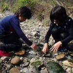 川藻貼り付け中