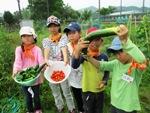 きゅうりとトマトの収穫