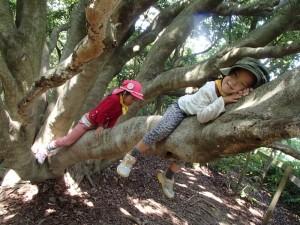 つるつるの木