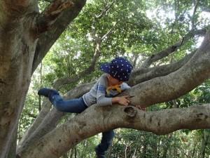 足で木をけってみて