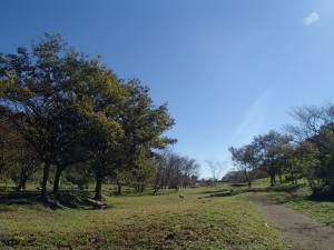 【追加募集あり】5/21里山しごと『春の森deお茶のみ会』