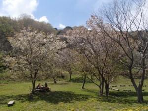 【春の野遊びフェスティバル】遊木の森で開催♪