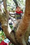 木登りできたよ