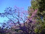 【報告】里山de遊び隊 2/12「竹を使って遊ぼうよ!」