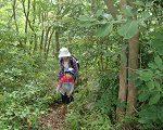 ジャングルを進む