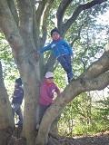 26木登り
