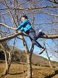 28 ひとりごう木登り