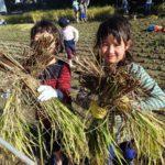【報告】わんぱく里山 10月→11/5「脱穀に挑戦!昔の人の知恵探し」