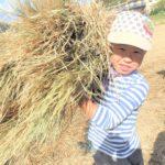 【報告】わんぱく里山 11/11「脱穀に挑戦!新米で竹筒ごはん作り」