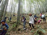 【報告】わんぱく里山4/21 タケノコ掘りと春探し