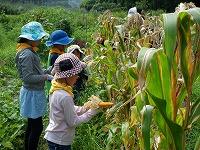 【報告】わんぱく題楽 8月・9月 収穫と、種まきと。