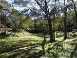 いつもの遊木の森