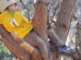 木の上で休憩中~