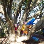 木のぼりが大人気
