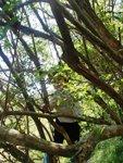 大好き木登り
