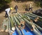 竹がいっぱい