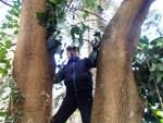 木の上の作業
