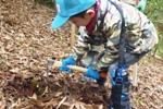 竹の子掘り