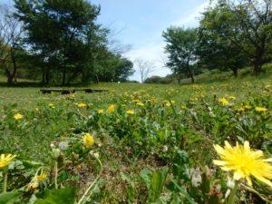 【遊木の森】春の野あそび会やります♪