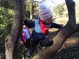 上級木登り
