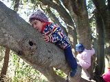 真剣な木登り