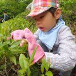 【報告】里山しごと体験講座2018 第1弾『春の里山でお茶会』
