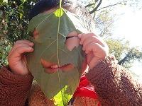 【報告】12/2里山のかやねずみ・にちようび 冬の森で宝物さがし
